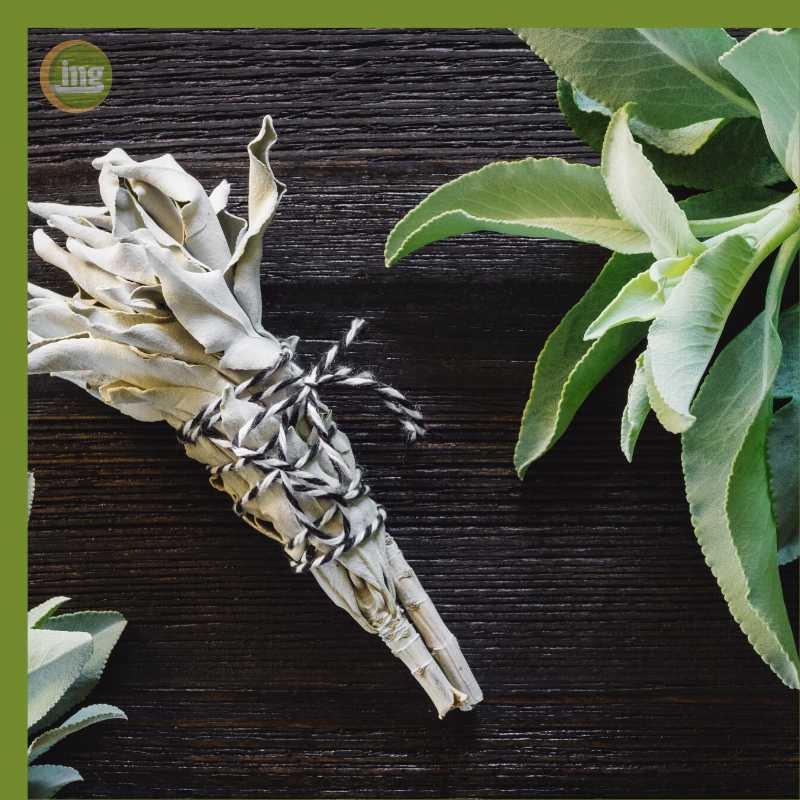 Das Hausmittel Salbei wird oft als Tee bei Zahnschmerzen eingesetzt.