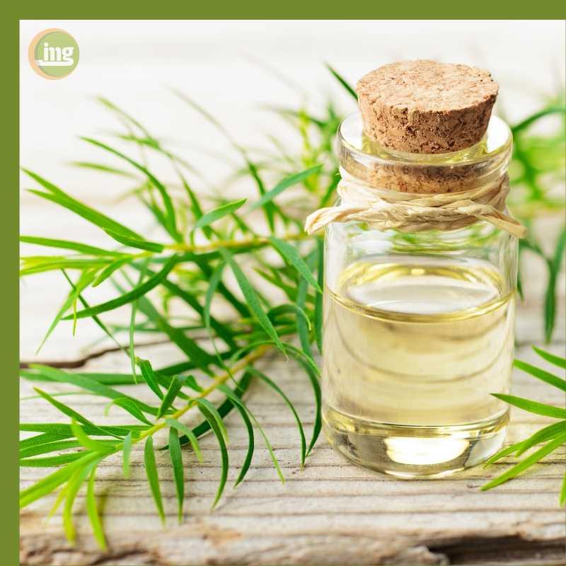 Australisches Teebaumöl, ein bewährtes Hausmittel, hilft bei Zahnschmerzen.