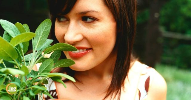 Welche Hausmittel helfen wirklich bei Zahnschmerzen? Junge Frau mit Salbeiblättern und gesunden Zähnen.